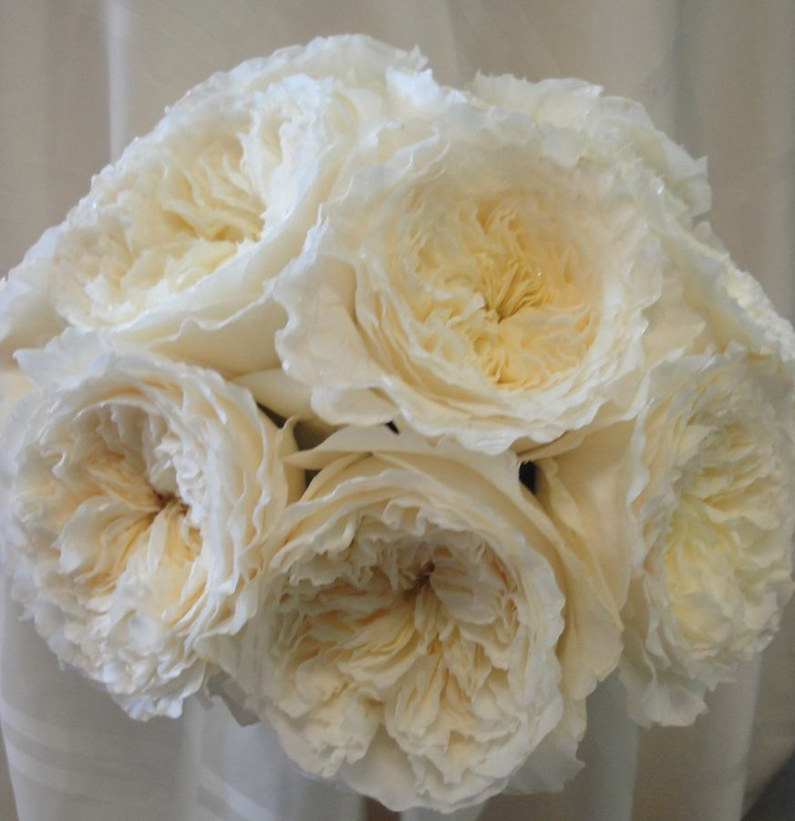 david austin patience rose bridal bouquet - White Patience Garden Rose