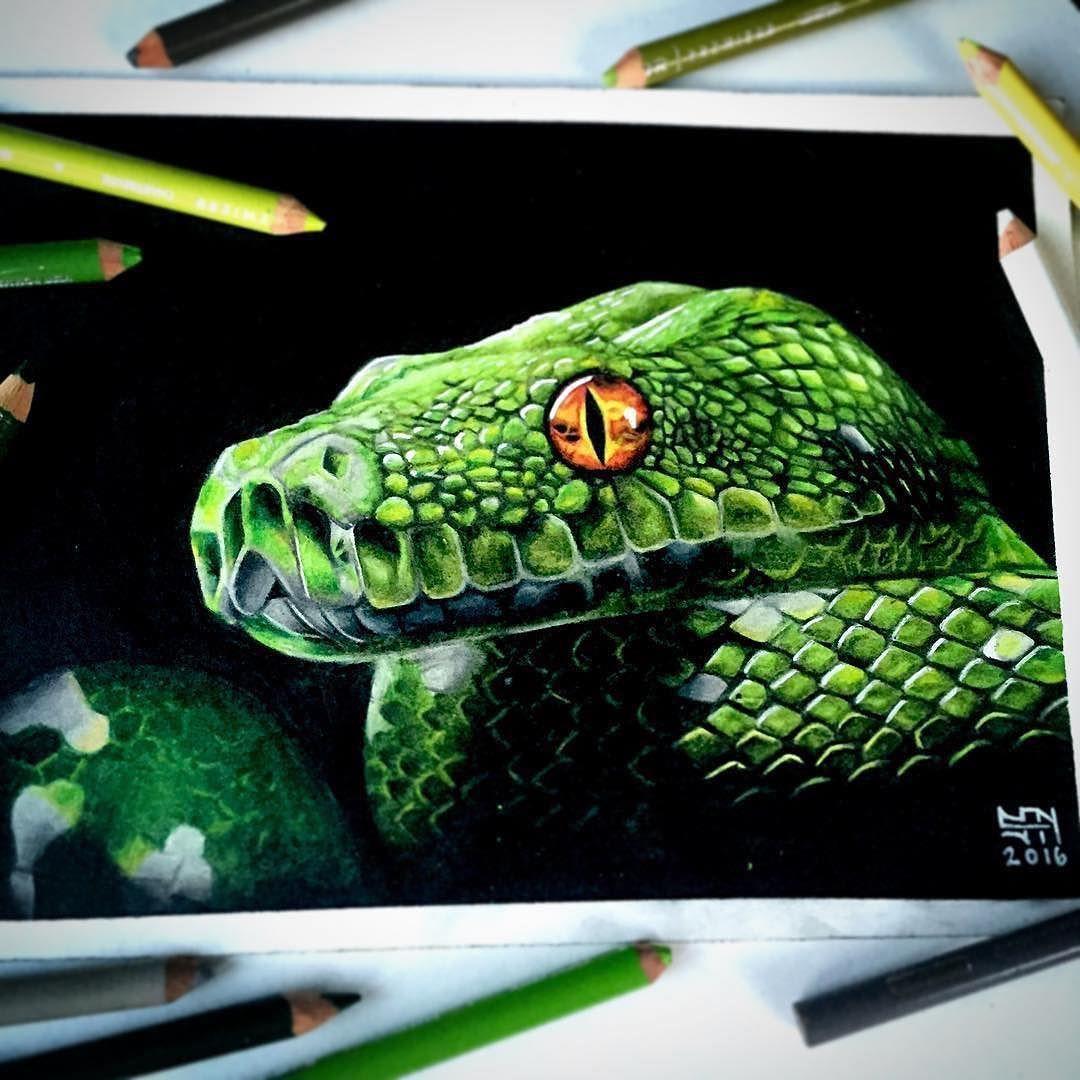 Green Snake Animal Art Artwork Photos Les Arts Couleur Dessin