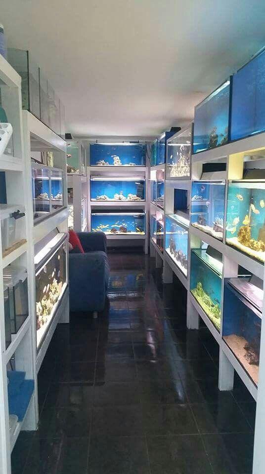 Pin On My Hobby Tropical Fish
