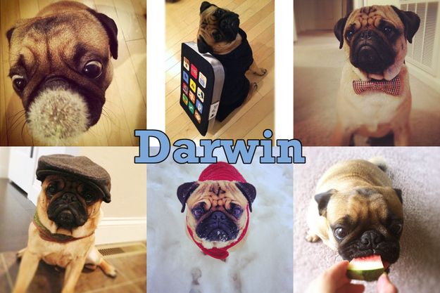 The 50 Cutest Instagram Accounts In The Whole World Cute Animals