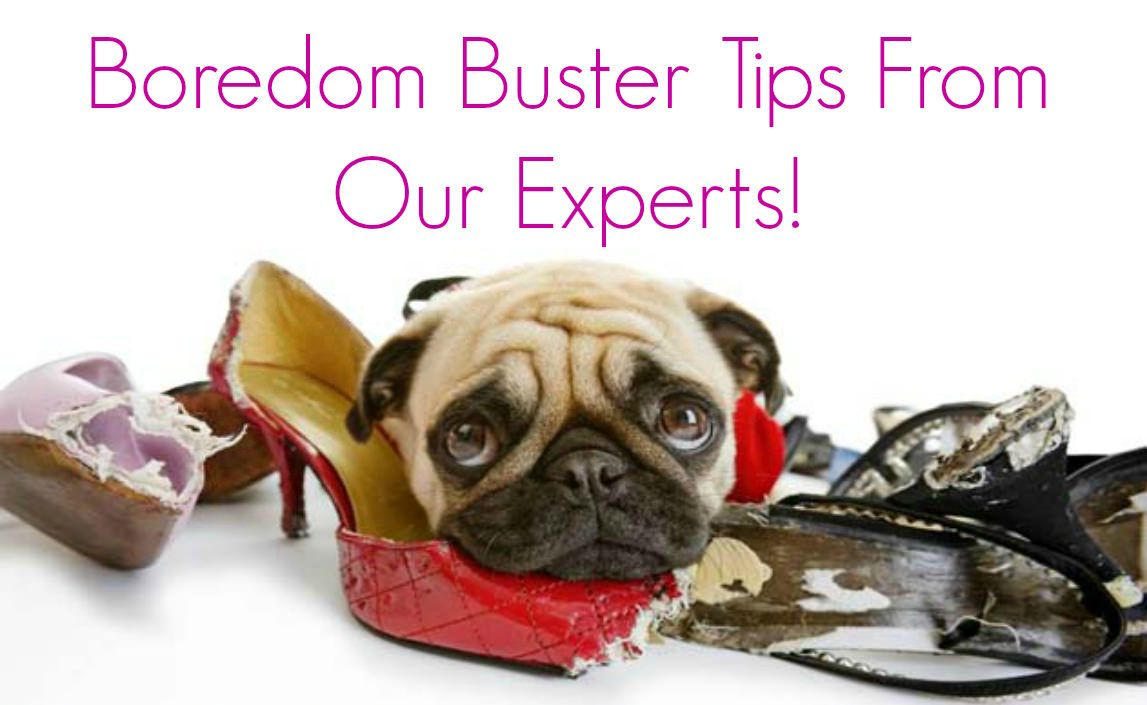 Boredom Buster Tips From our Experts! Dog clinic