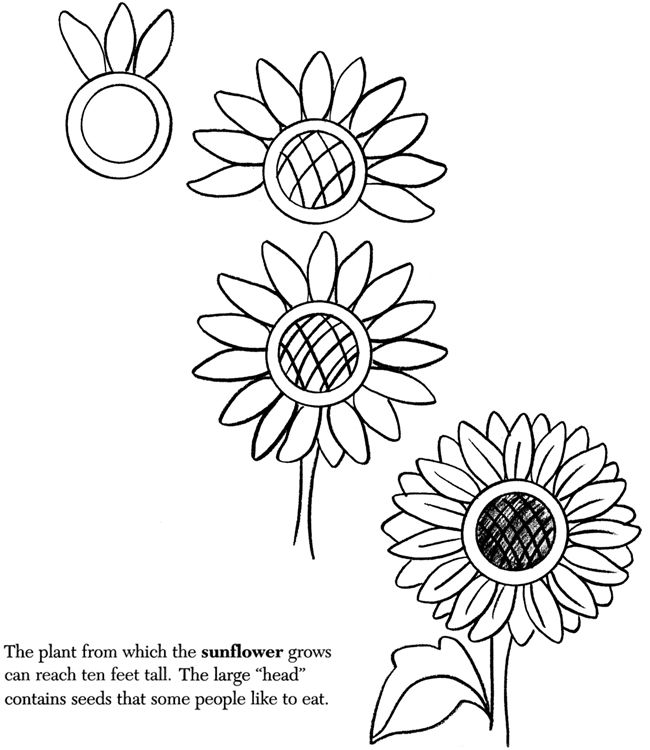 how to draw a sun flower | Sunflower drawing, Drawings