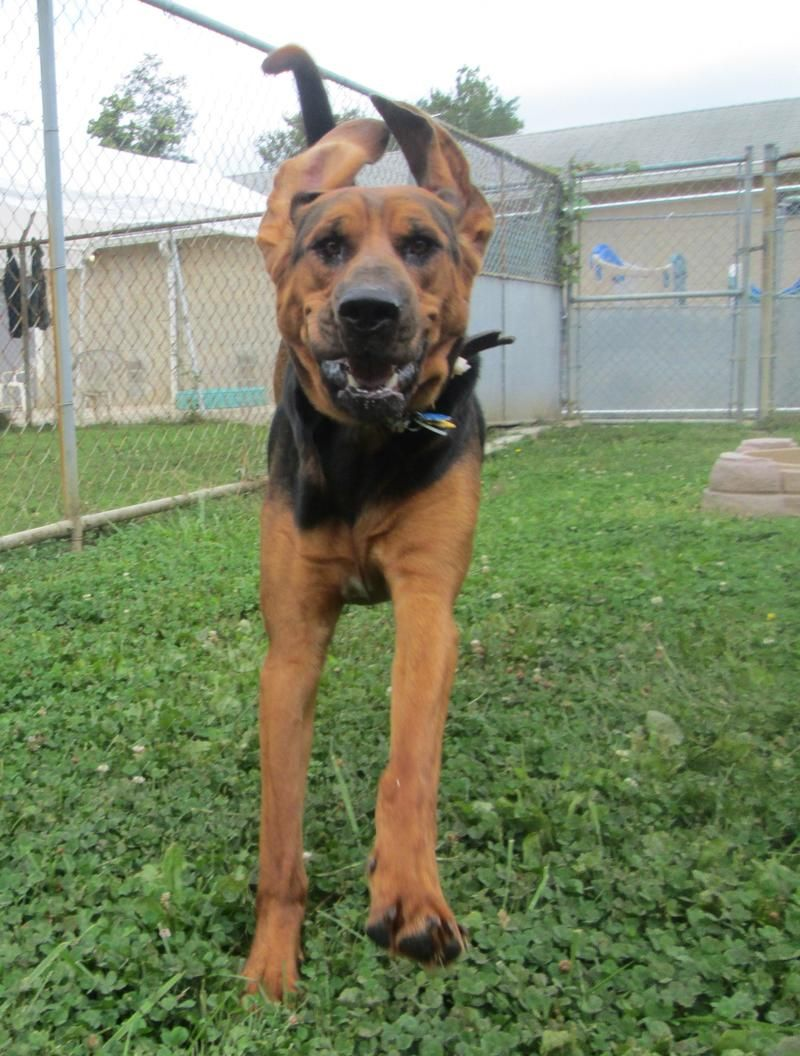 Adopt Walter on Petfinder Dog adoption, No kill animal