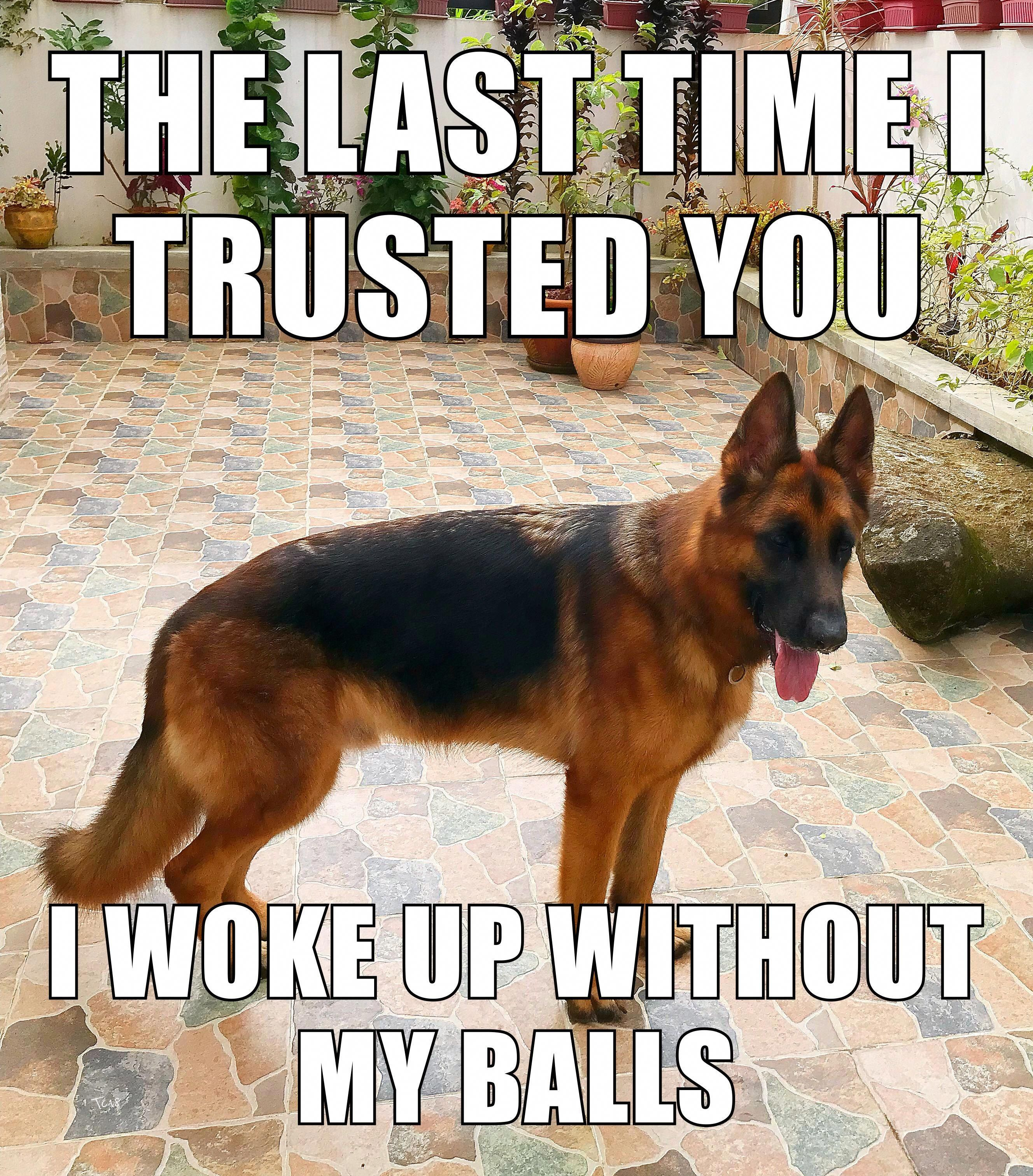 Truthful Dogs Frases #dogfie #FemaleDogsAccessories