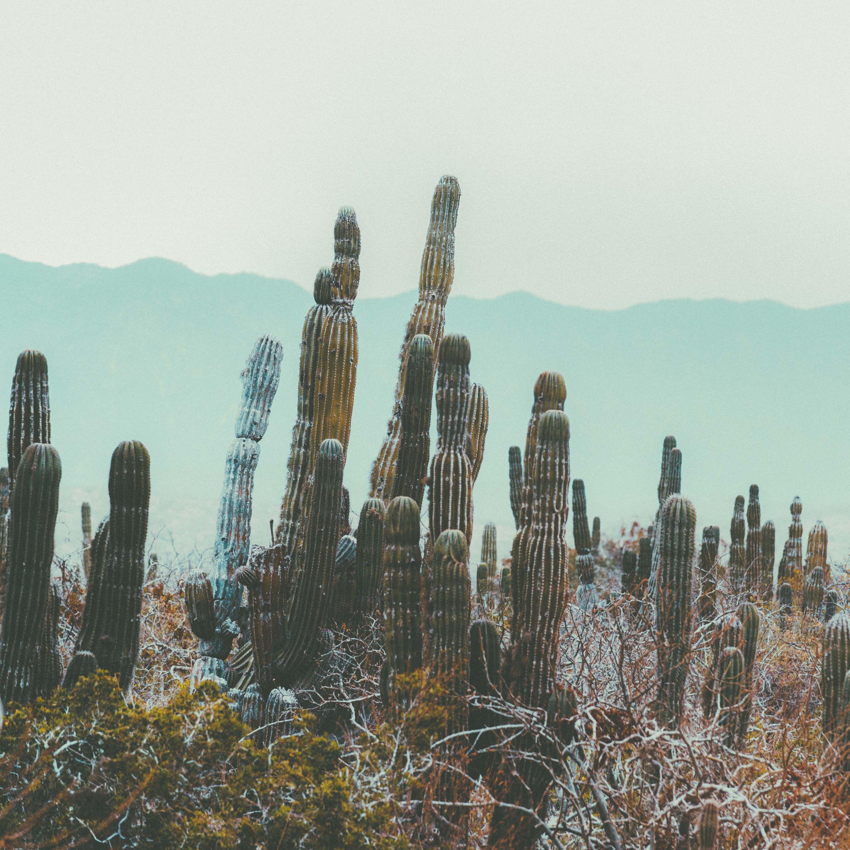 towering cacti & high temps || desert vibes