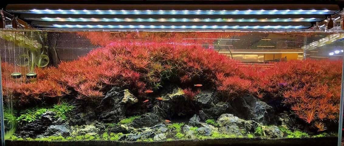 Pin by Barry L on Aquarium and Fish | Aquascape, Aquascape ...