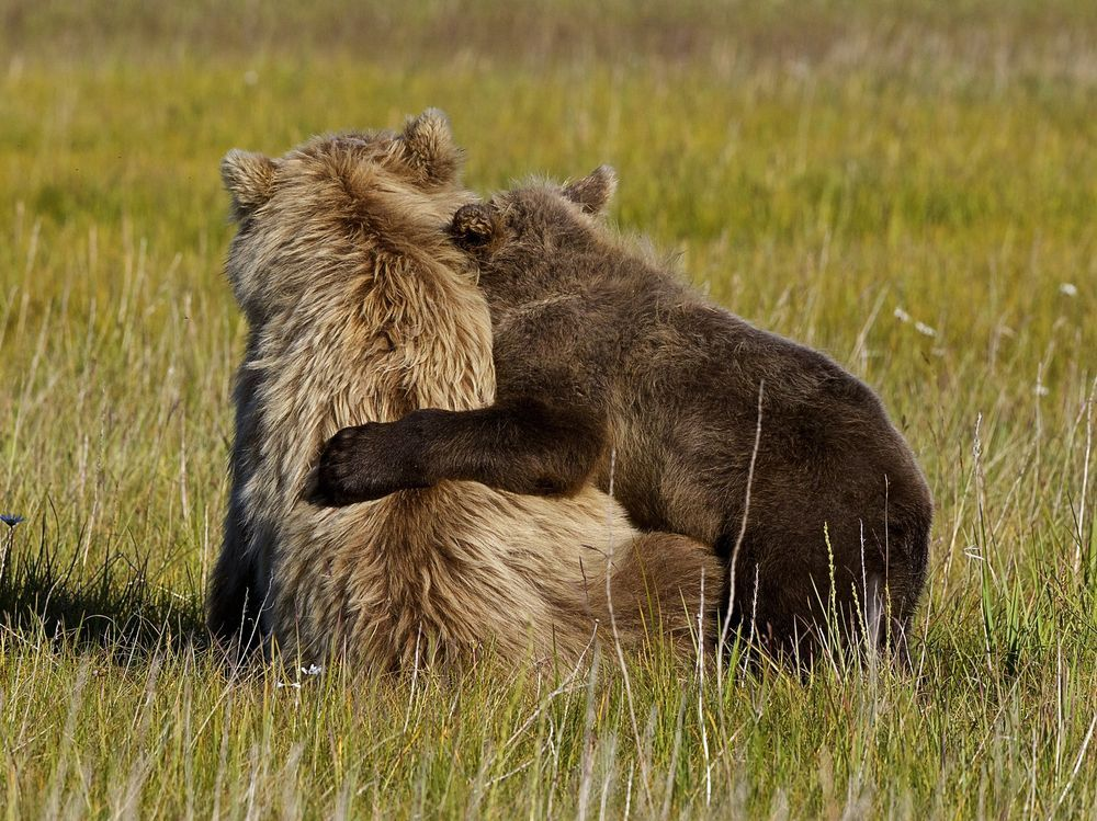 I love you mum photo by andy skillen national