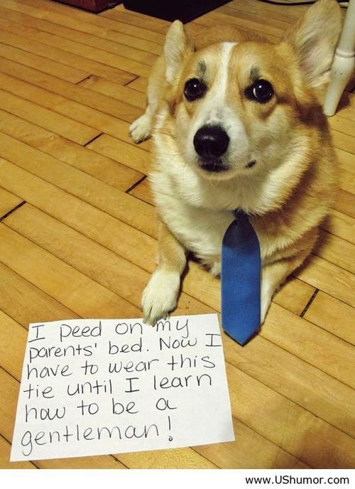 Dog Punishment Us Humor Funny Pictures Quotes Pics Photos Images Dog Shaming Funny Animal Pictures Animal Shaming