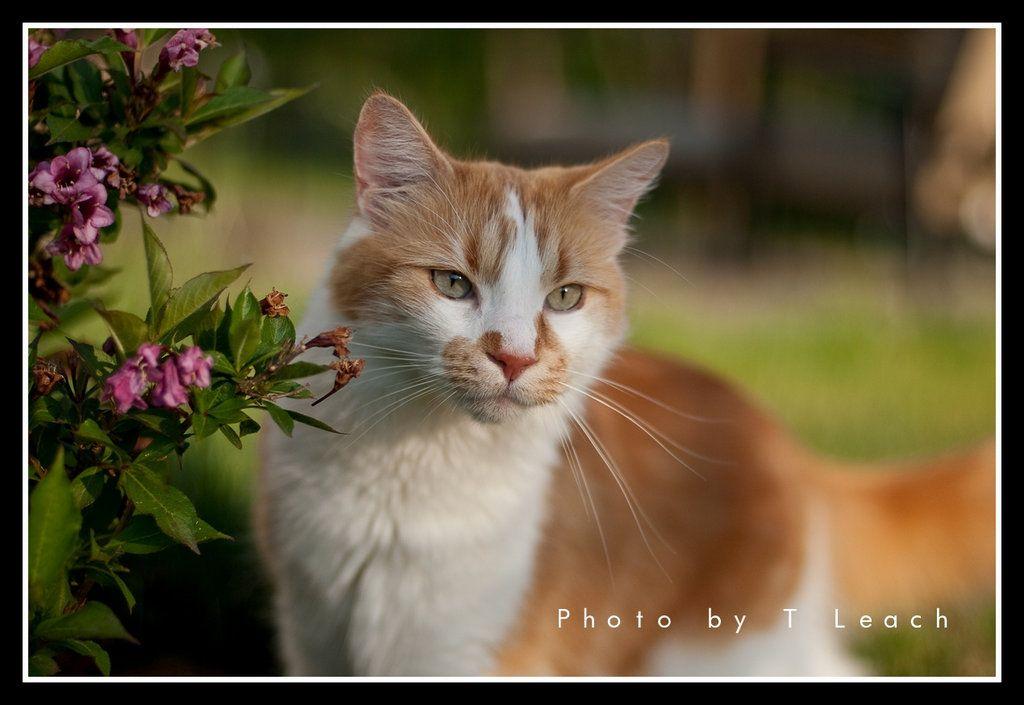 Innocent Kitty by ~tleach0608 on deviantART