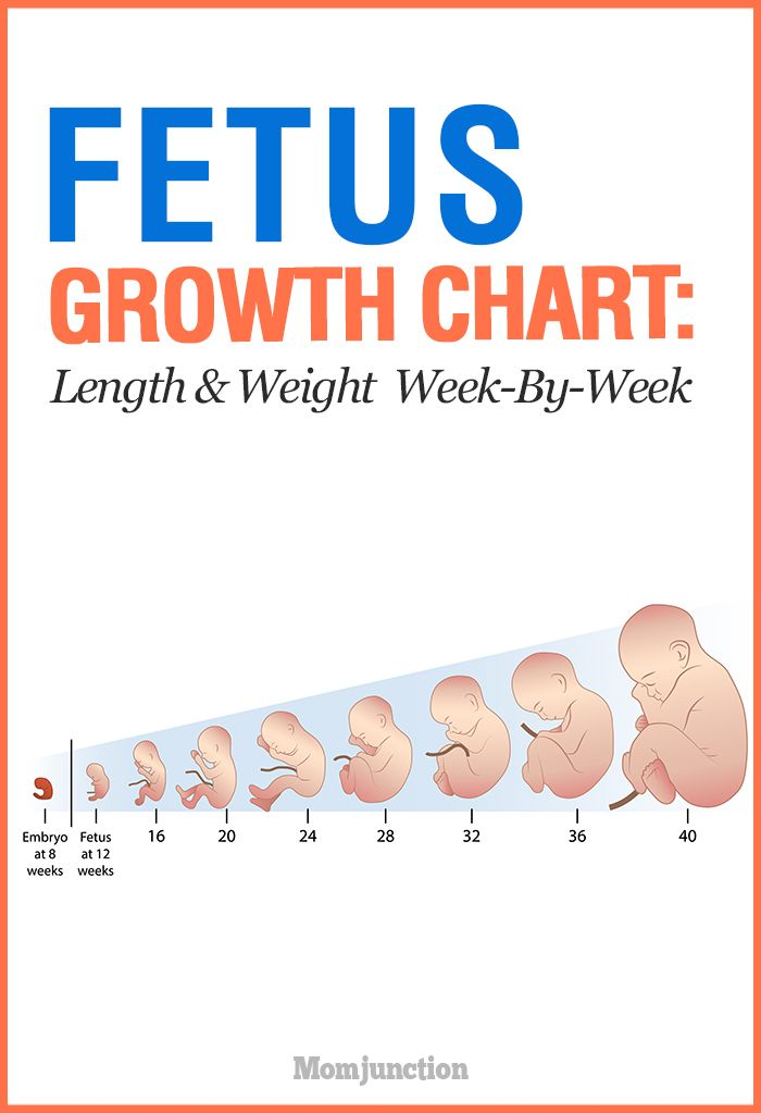 Growth Chart Fetal Length And Weight Week By Week Advice