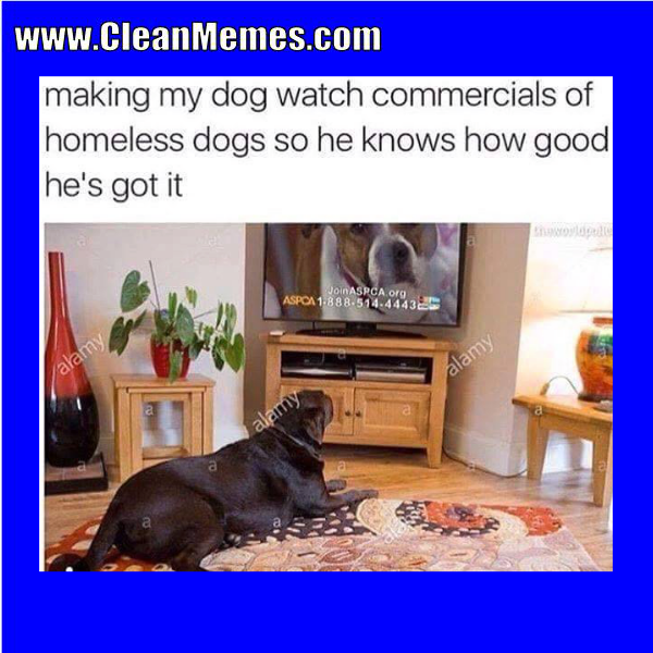Www Cleanmemes Com Homeless Dogs Clean Memes Watch Dogs