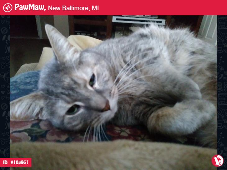 PAWMAW ALERT CAT LOST IN NEW BALTIMORE, MI Losing a pet