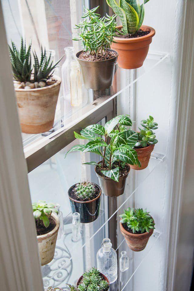 Indoor Garden Ideas Apartment