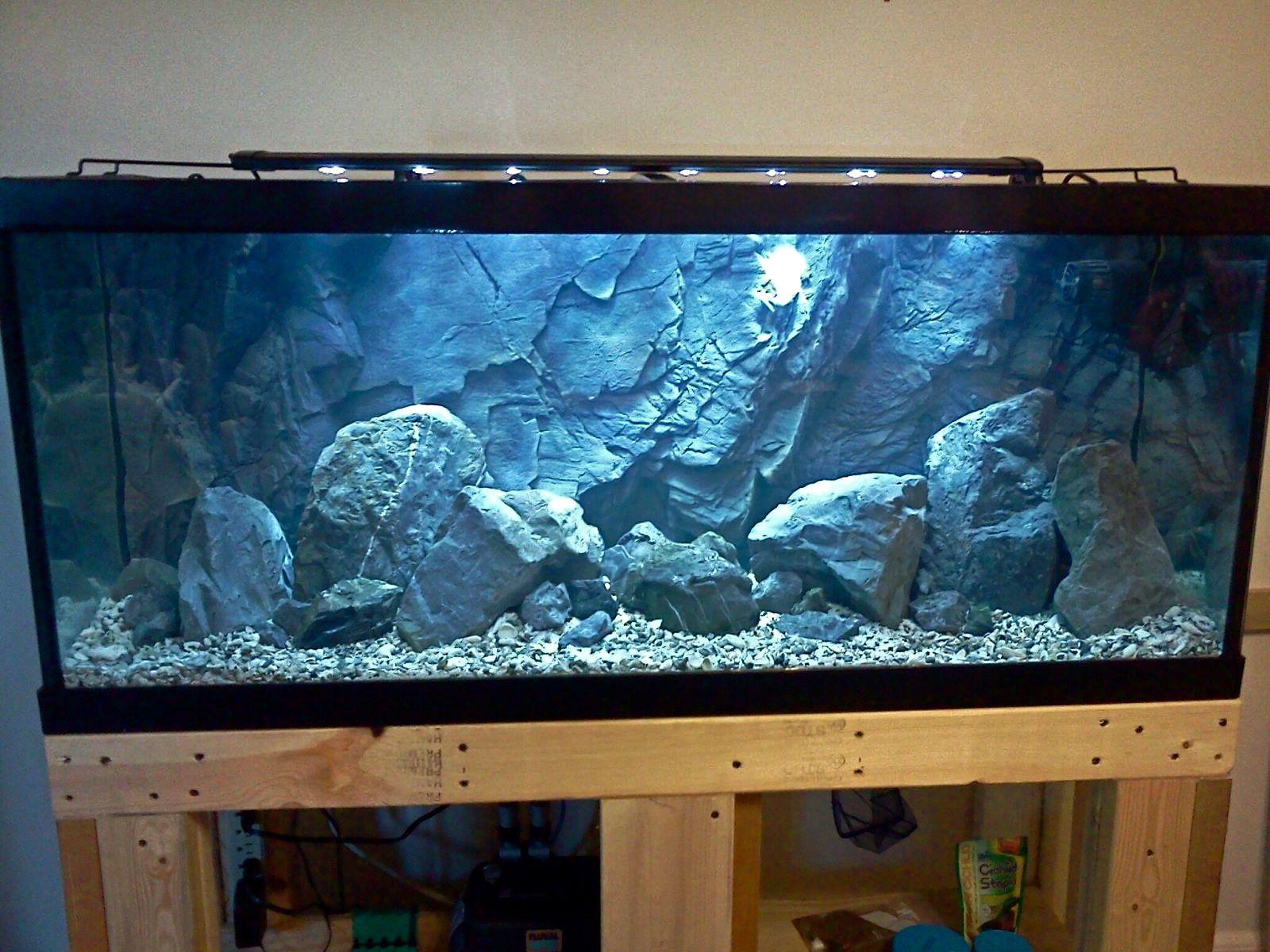 Aquascape idea lake malawi mbuna pinterest for Cichlid fish tank