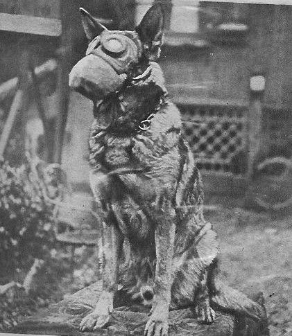 German Shepherd During Ww1 Wearing Gas Mask To Protect From Deadly