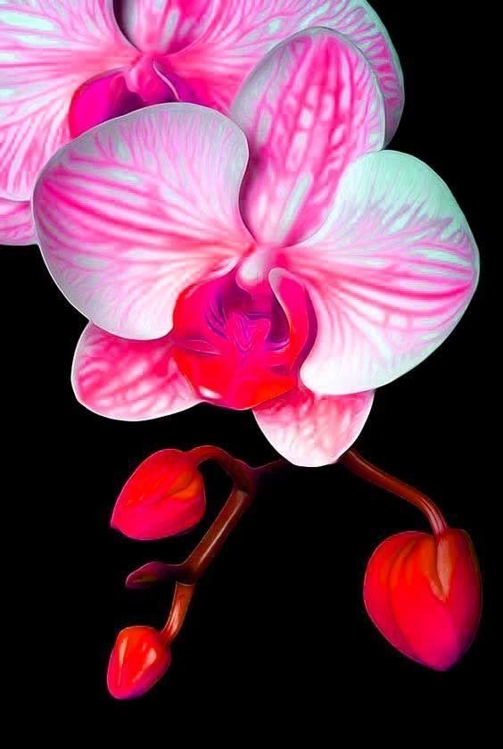 Pink - Belle fleur a dessiner ...