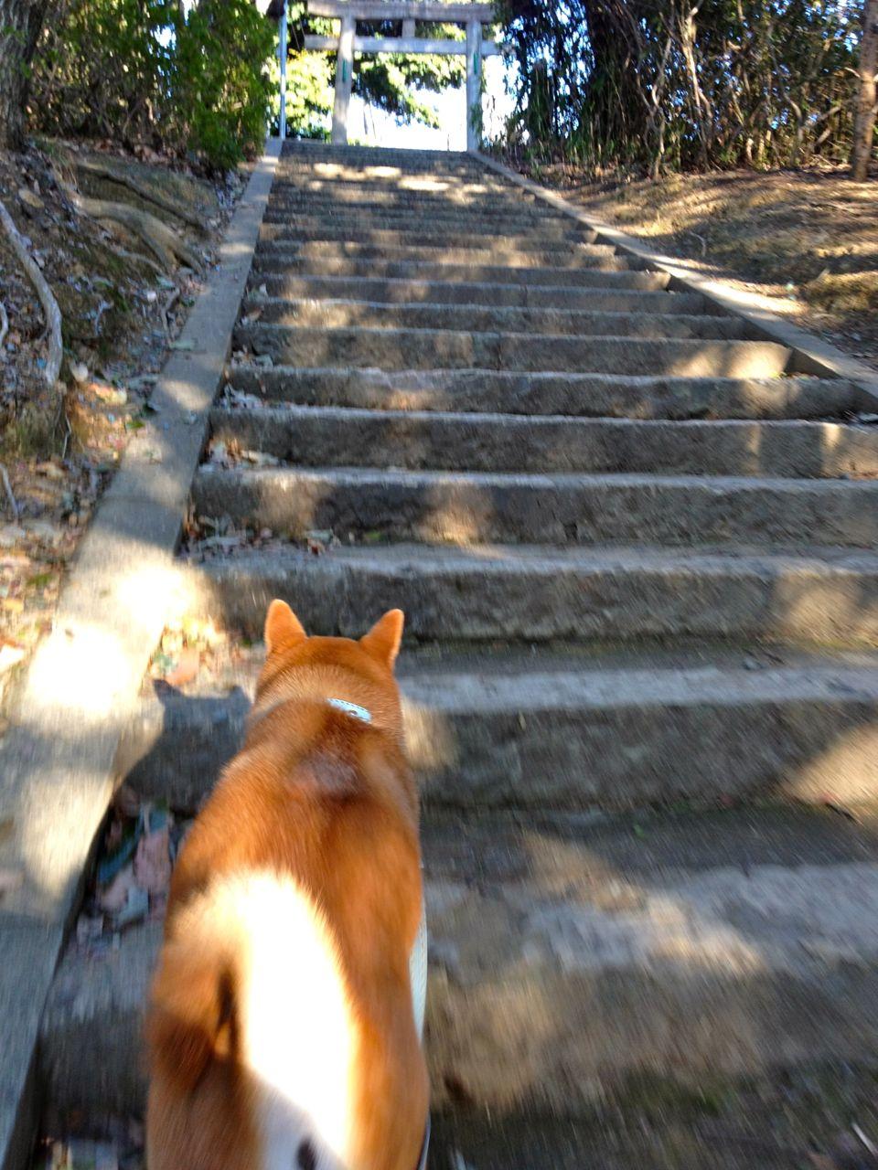 Stone steps to a torii.