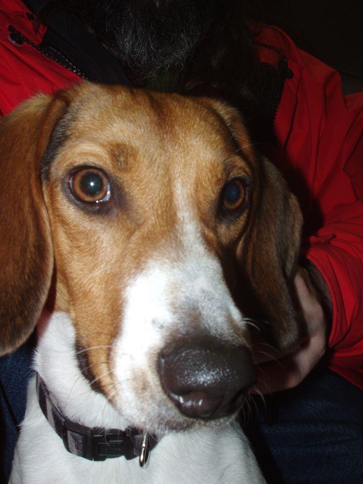 #dog  #petfinder  #rottweiler  #pitbull  #cockapoo  #yorkie  #malta  #puppies  #chihuahua  #dachshund  #pug   #havanese  #bulldog  #poodle  #breeding  #poodles  #pupps  #akc  #infodog  #sheltie  #keeshond  #pekingese  #terrier  #breed  #canine  #puppys  #labra