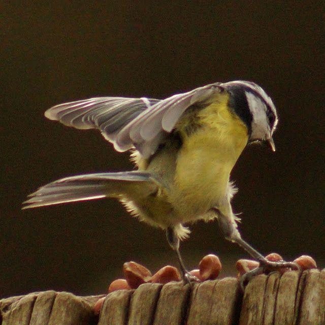 dancing queen  vögel im flug