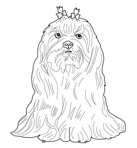 Maltese Dog Coloring Page Kleuren Honden Dieren