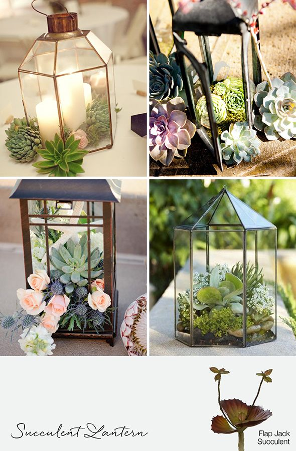 Wedding lanterns with succulents on our glass