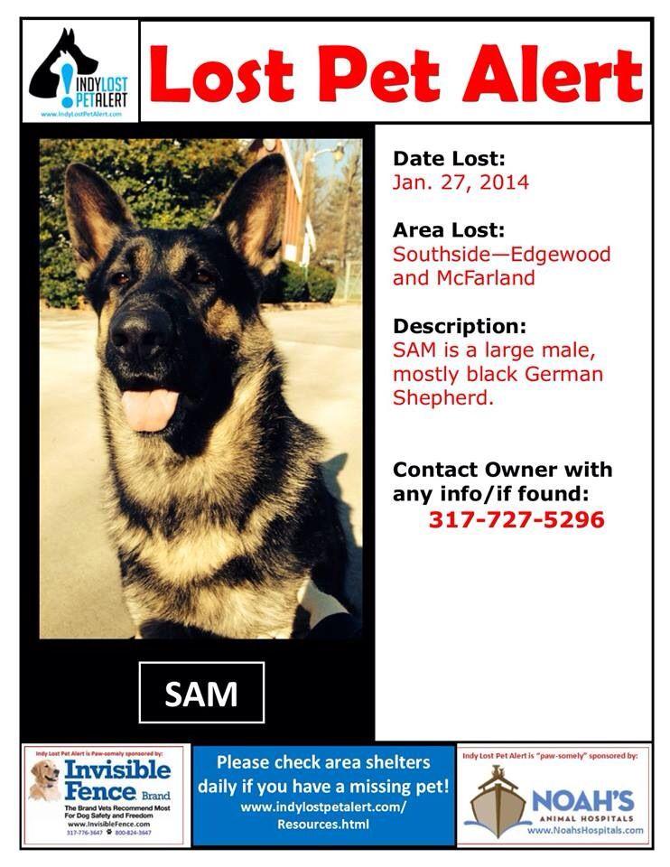 Lostdog 1 27 14 Indianapolis In Edgewood Mcfarland Male Gsd Germanshepherd Mostly Black 317 727 5296 Htt Losing A Dog Losing A Pet Black German Shepherd
