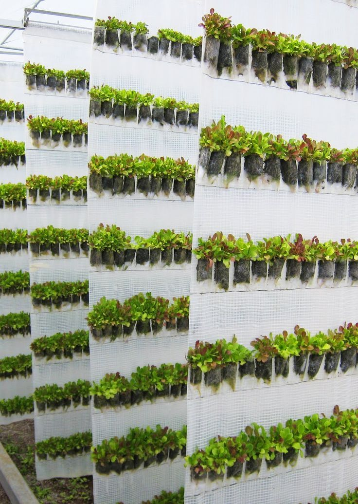 Micro Scale Hydroponic Vertical Gardening Food Hydroponic Hydroponic Farming Vertical Farming Hydroponics