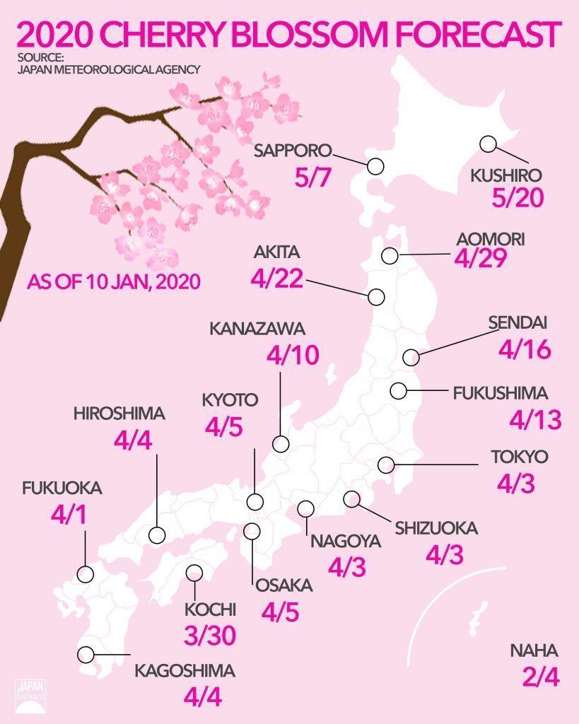 Japan Cherry Blossom Forecast Cherry Blossom Kyushu Blossom