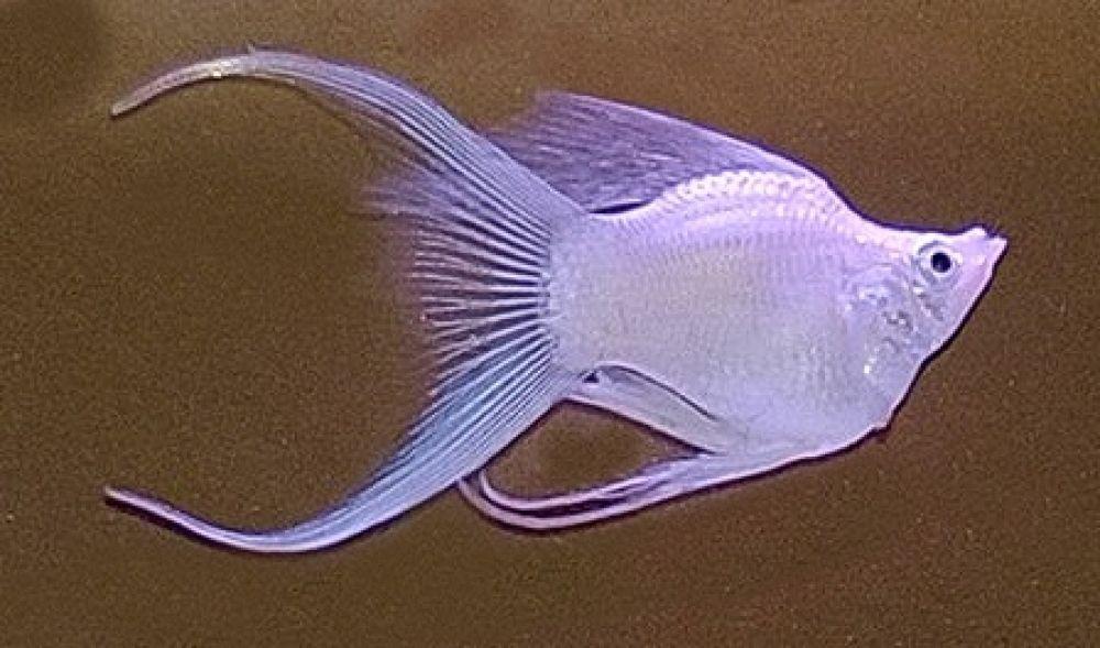 Just Look That S Outstanding Enjoy Https Fishplace Eu In 2020 Tropical Fish Aquarium Aquarium Fish Molly Fish