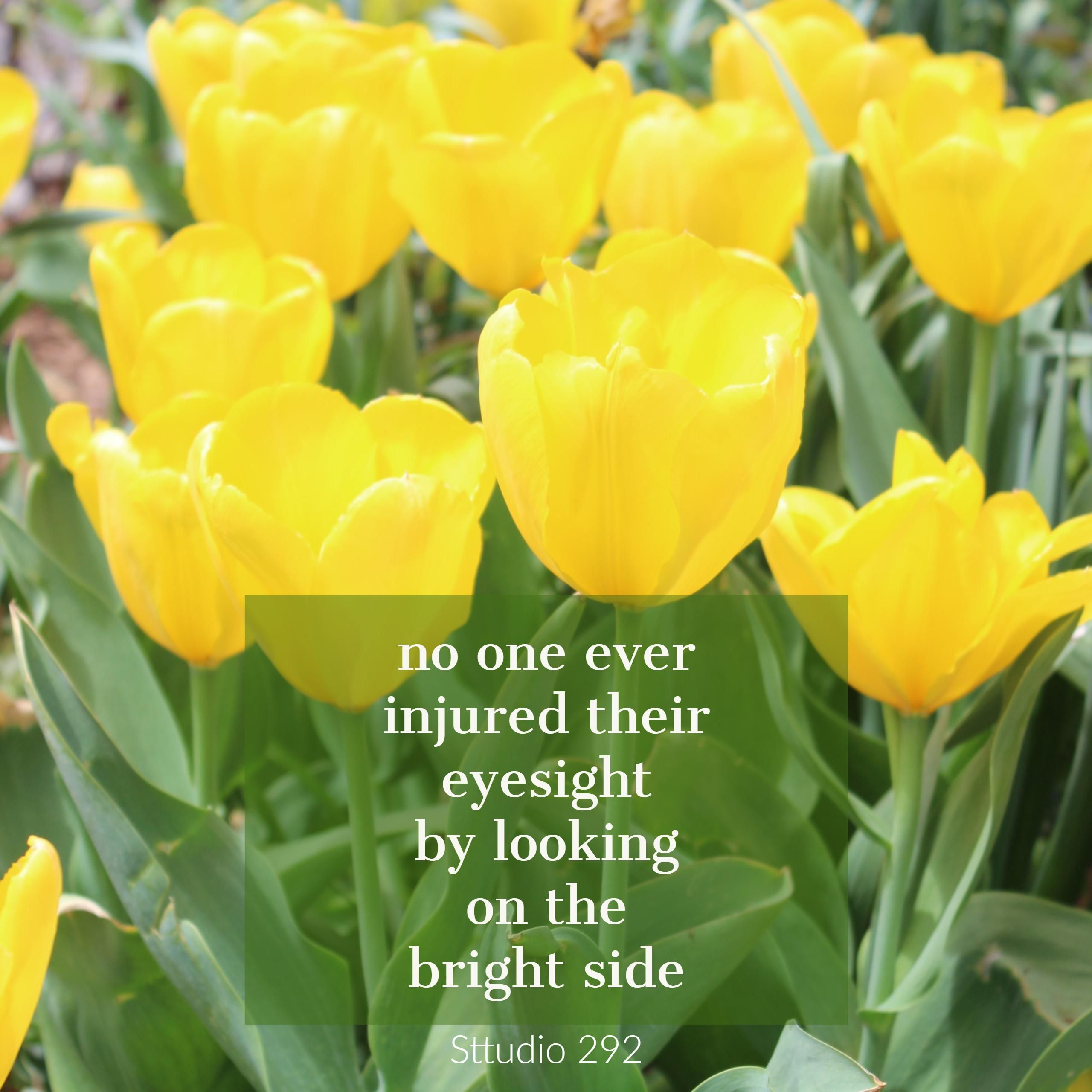 Beautiful yellow tulips Tulips quotes, Hello happiness