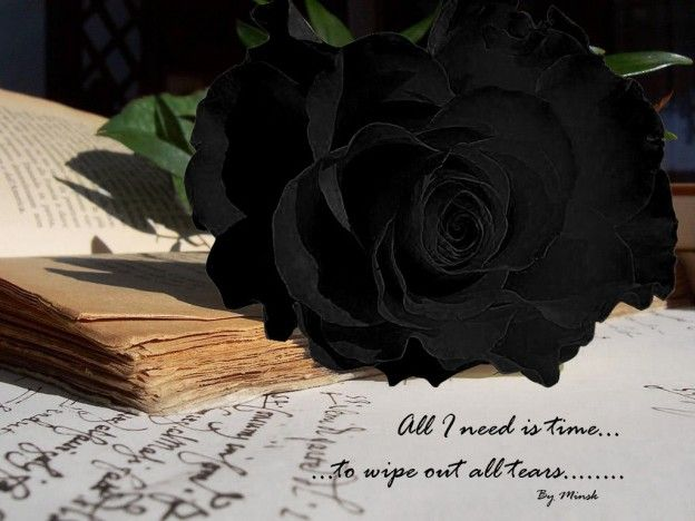 Black Rose Hd Wallpapers Free Download Black Rose Pictures Full Hd 1080p Black Rose Desktop Backgrounds Roma Black Rose Picture Black Rose Flower Black Rose