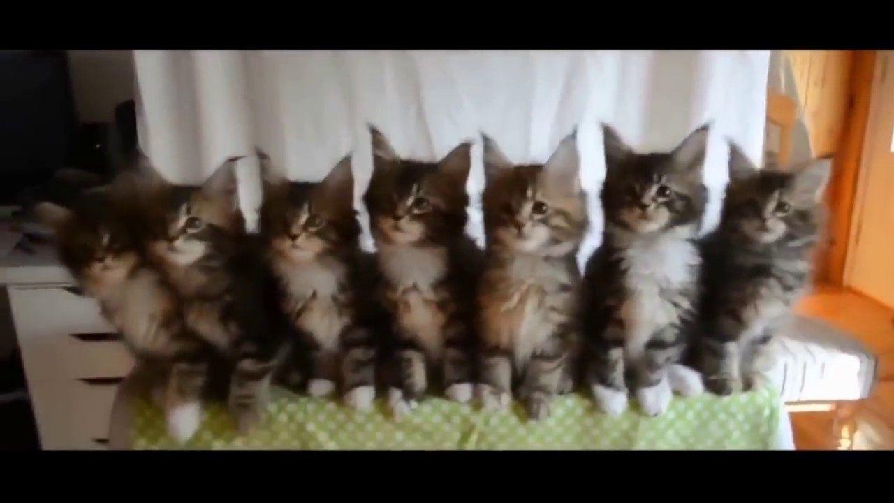 Vídeo de gatos engraçados e loucos