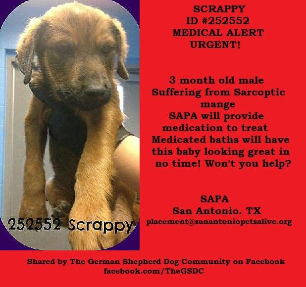 Scrappy Needs Shares Pledges Etc Please Help This Sweetie All