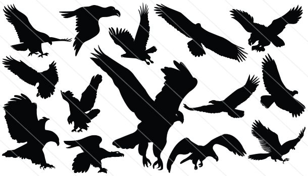Flying Eagle Silhouette Vector Download Flying Eagle Vector Silhouette Vector Eagle Silhouette Eagle Vector