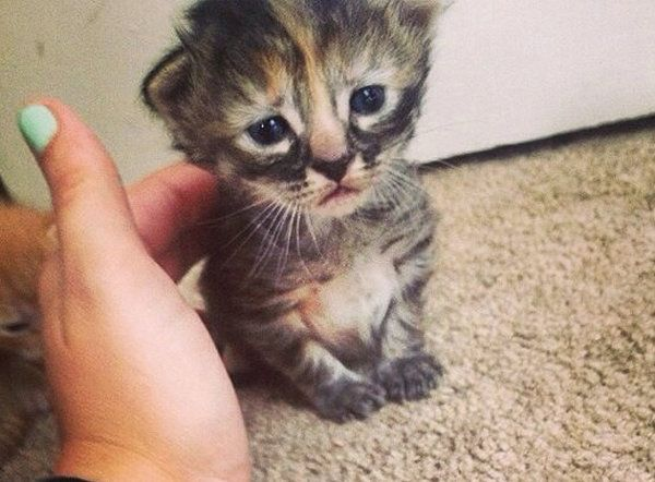 Allow me to introduce… 'Purrmanently Sad Cat' May Be the Saddest Kitten on the Internet