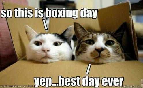 What Would Be The Public Holiday Days Off During The Festive Season 2015 Ask Naij Cat Quotes Funny Funny Animal Pictures Funny Animal Memes