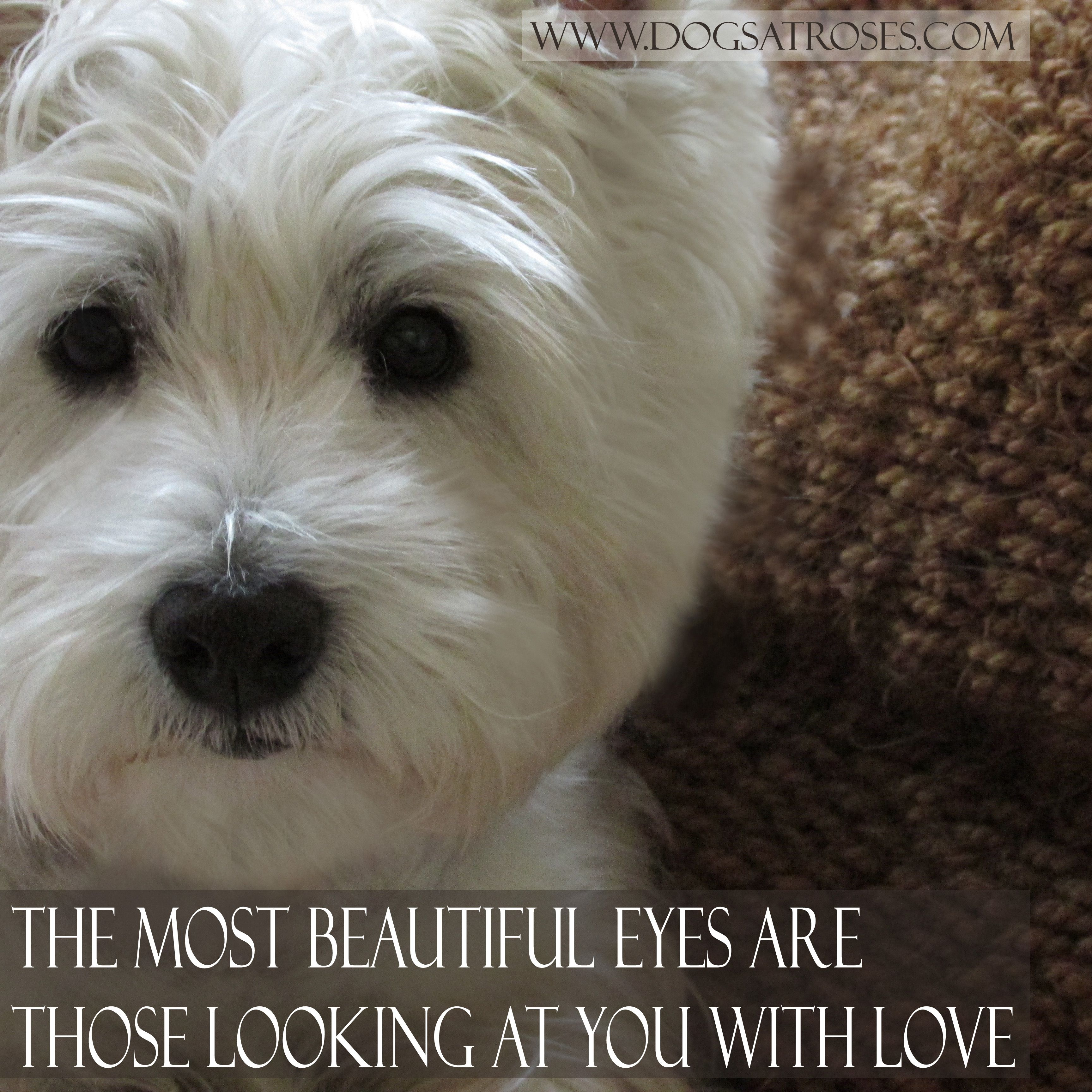 The Most Beautiful Eyes Are Those Looking At You With Love