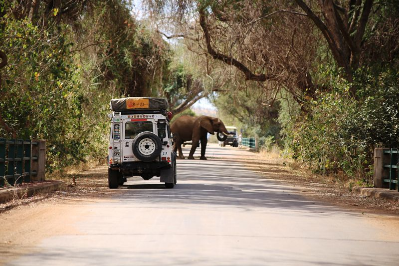 You do not set the pace here, as this elephant proved on our way to meet our guides on the  low-water Luvuvhu Bridge.