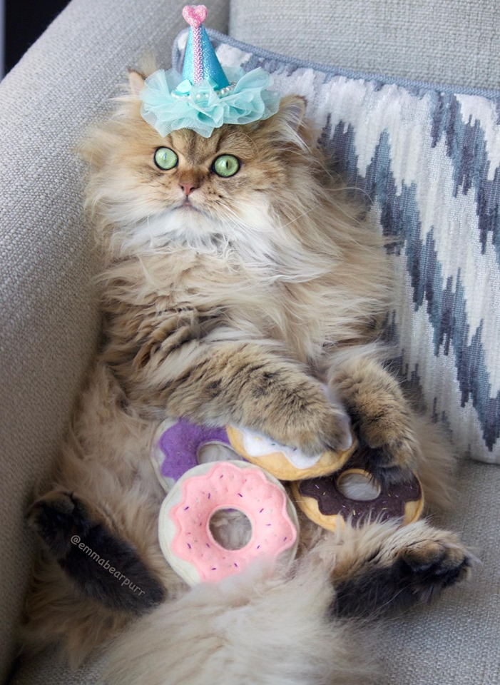Idea By Jo Allen On Meowy Birthday Cat Birthday Kitty