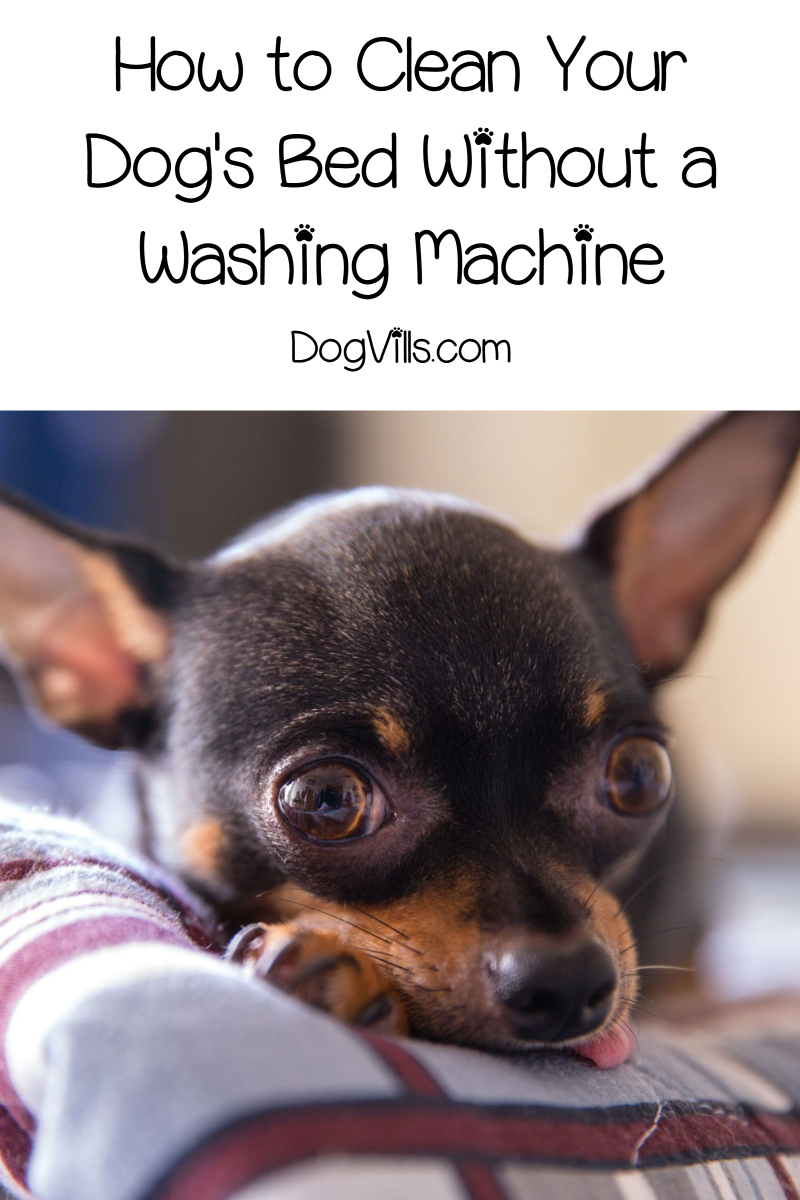 How to Clean a Dog Bed Without a Washing Machine Dog bed