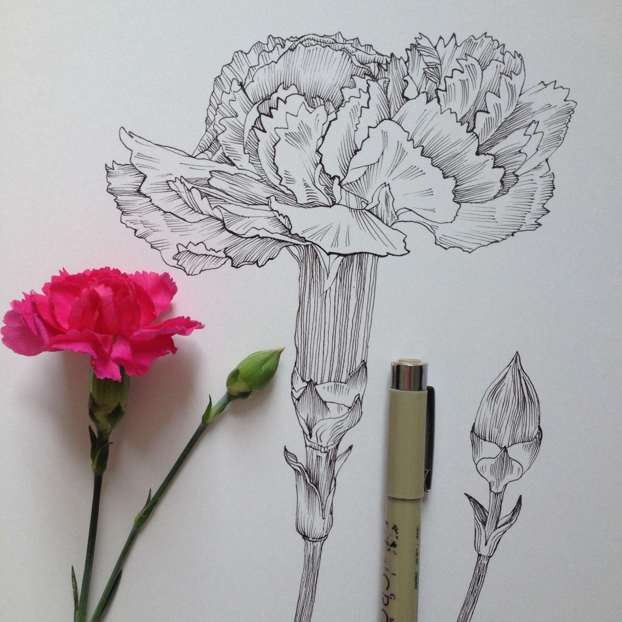 Noel Badges Pugh Flower Drawing Flower Sketches Drawings