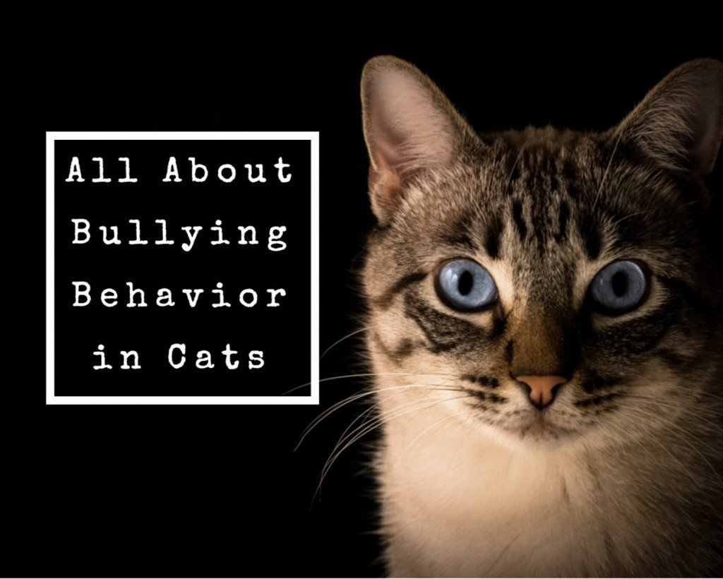 The Best Ways To Stop A Cat From Being A Bully Cat Behavior Cat Problems Cat Attacks Dog
