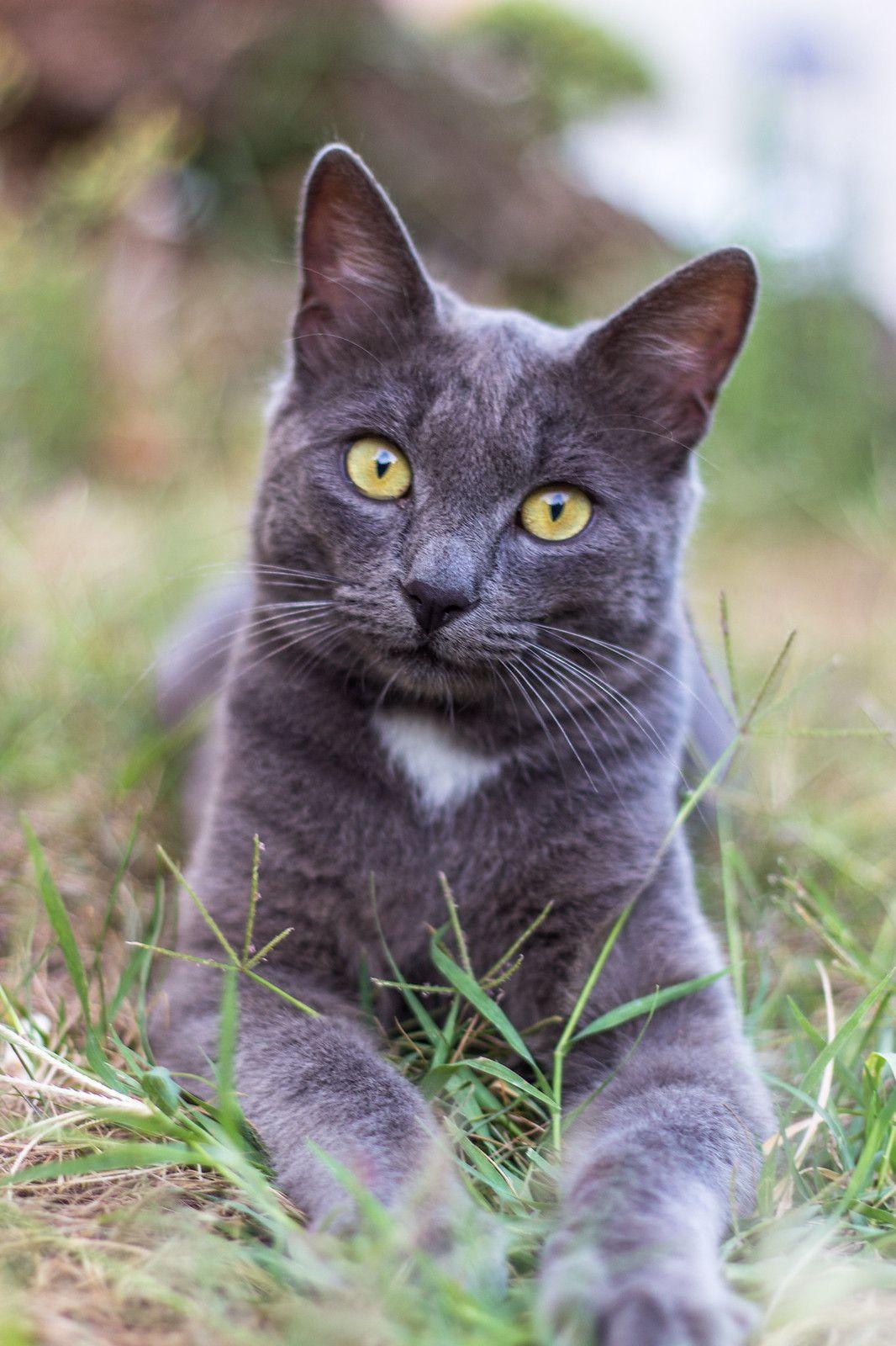 Yellow eyes Pretty cats