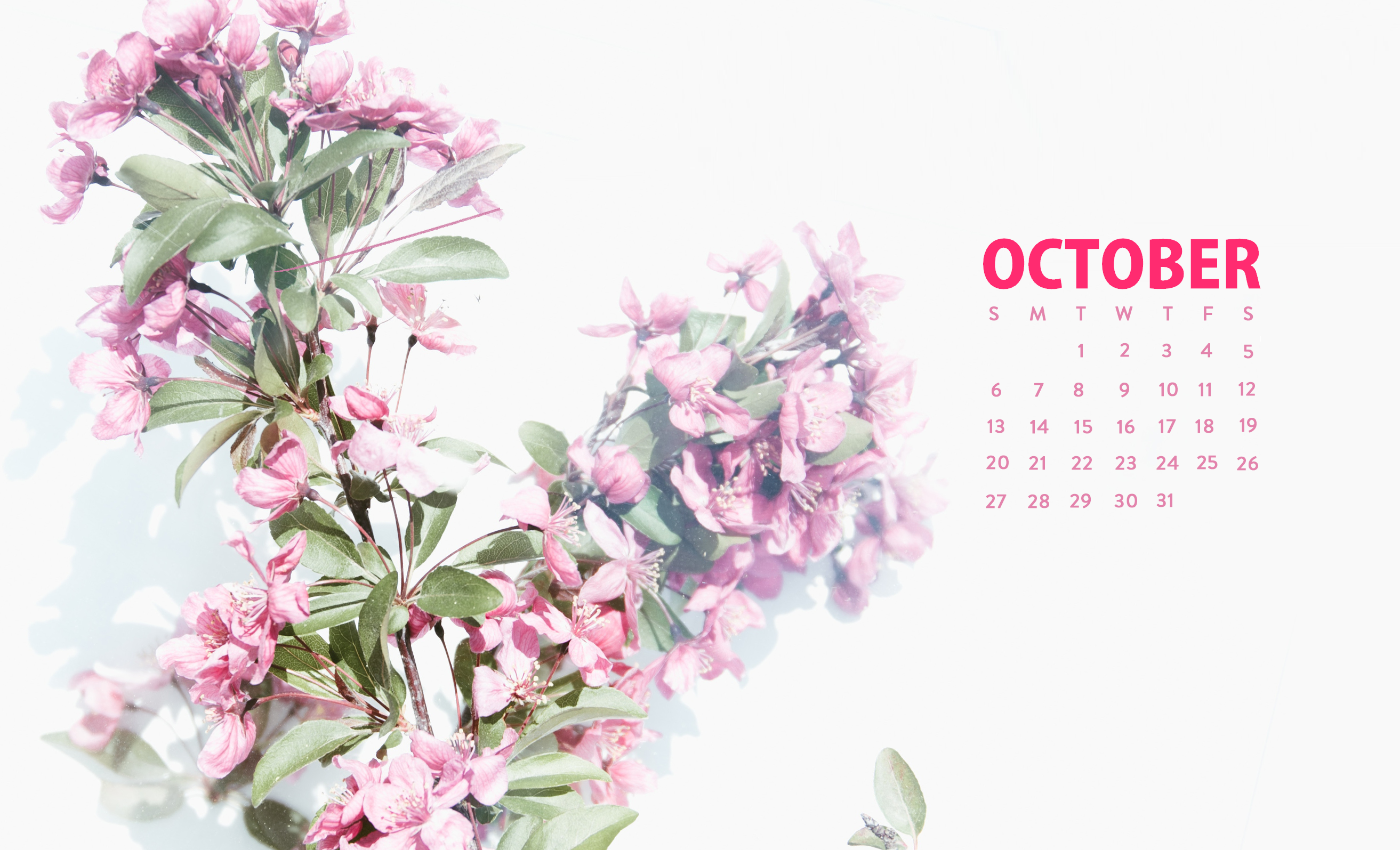 10 October 2020 Calendar Plant Floral Cute Wallpaper In 2020 Desktop Wallpaper Calendar October Wallpaper Calendar Wallpaper