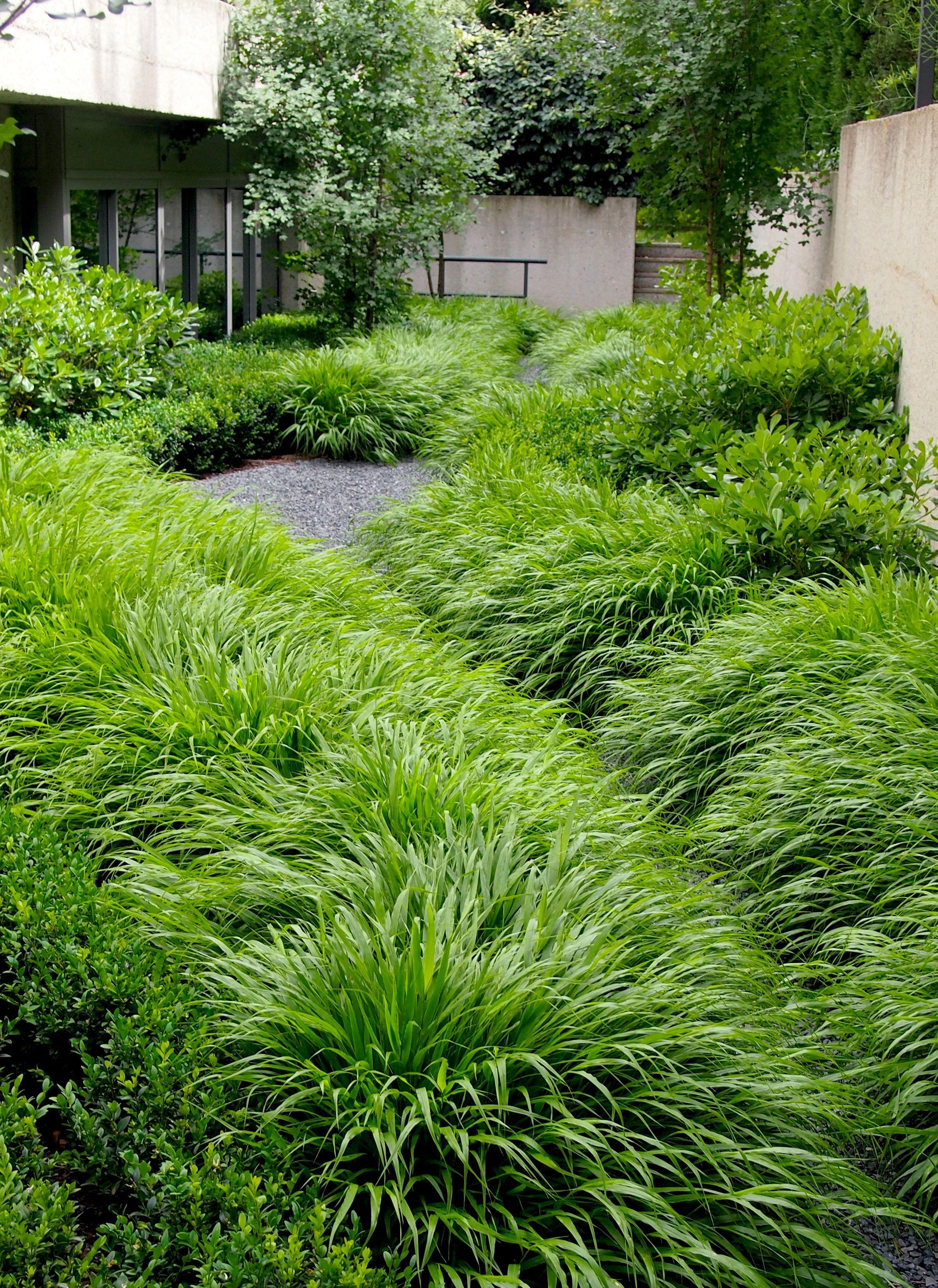 Hakonechloa Macra. Jardín Aravaca Paisajismo Miguel Urquijo www ...