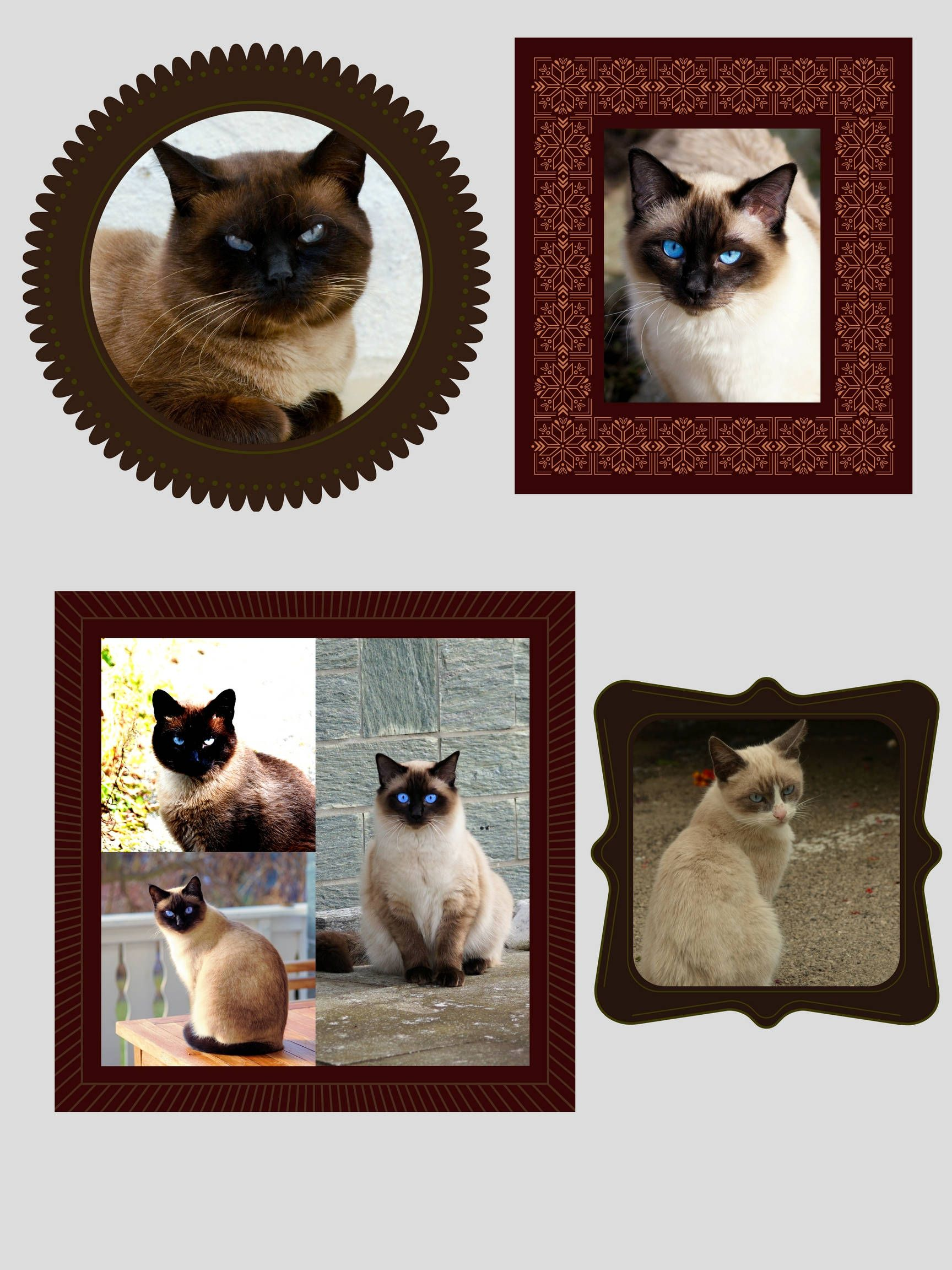 Siamese Cat Printable Art, Printable Poster, 18 x 24 inches, 8.5 x 11 inches, Cat Lovers, Wall Art, Home Art, Digital Download Only by KittyVoices on Etsy
