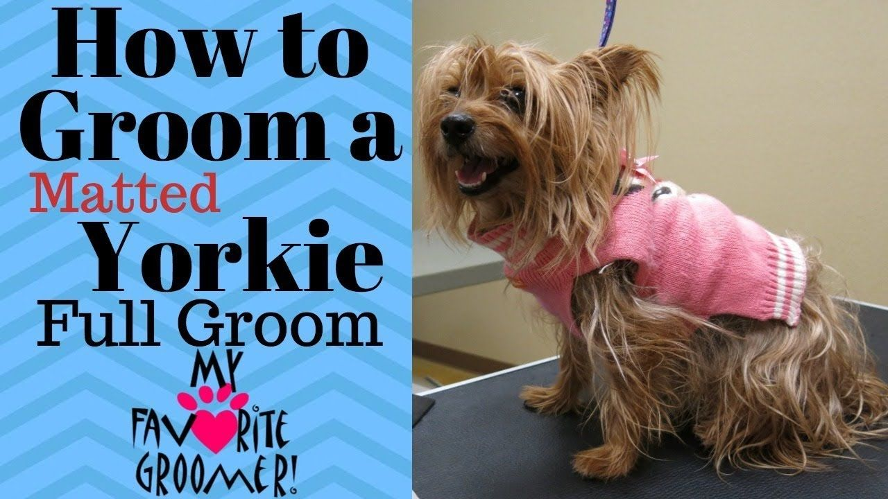 How to groom a yorkie matted youtube dog grooming tips
