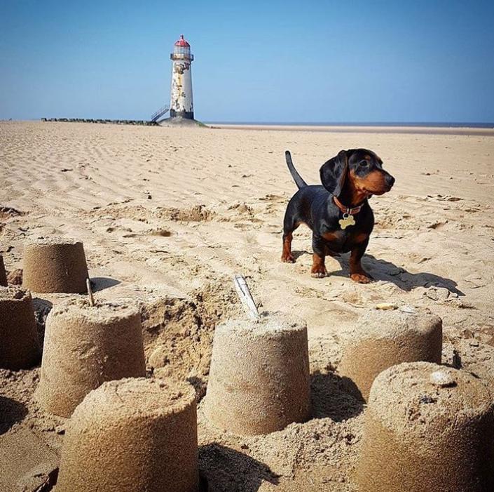 Pablo Loves The Beach Dachshund Perros
