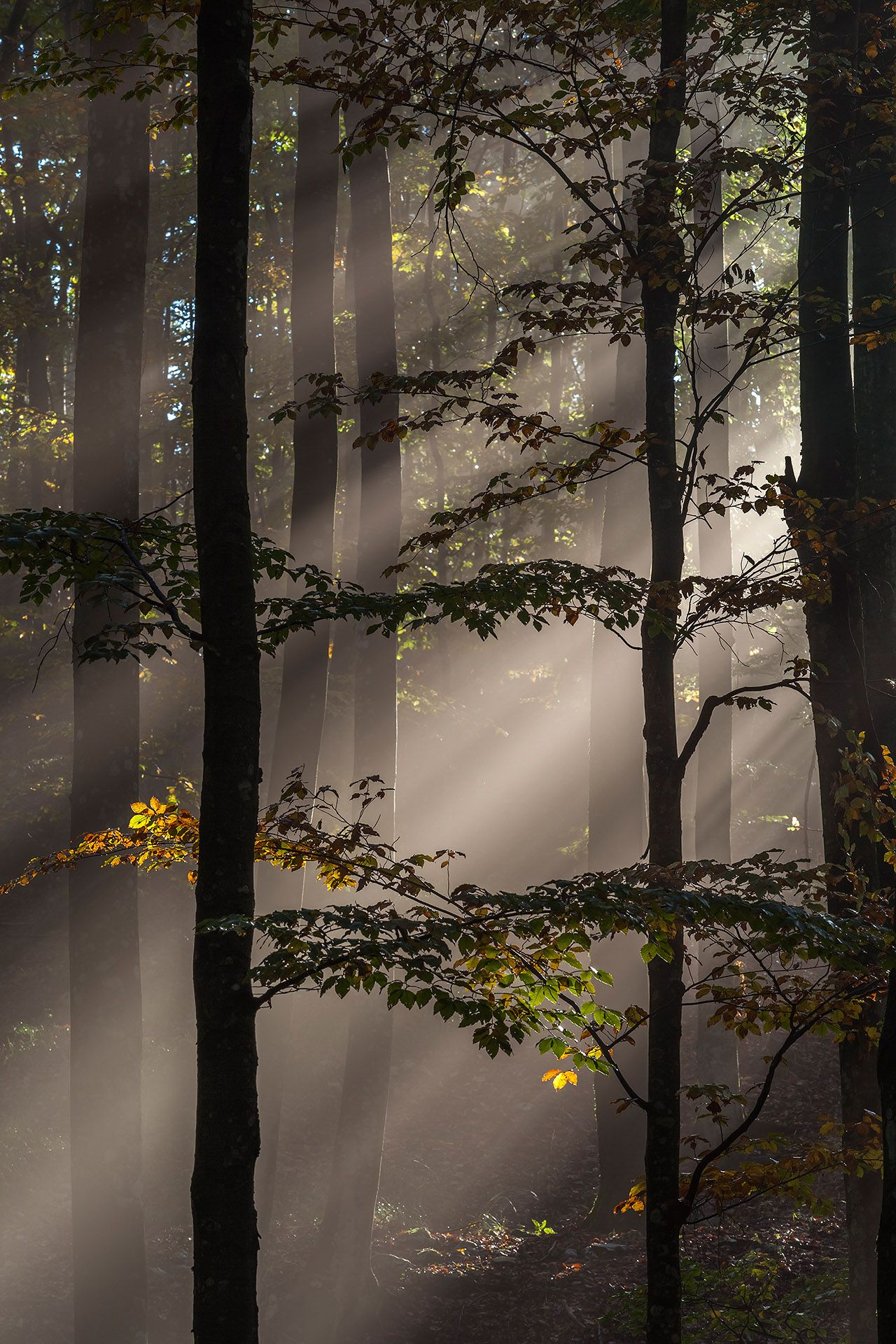 International Garden Photographer Of The Year Competition 10 Trees Woods Forests Comm Nature Photography Beautiful Nature Beautiful Landscapes
