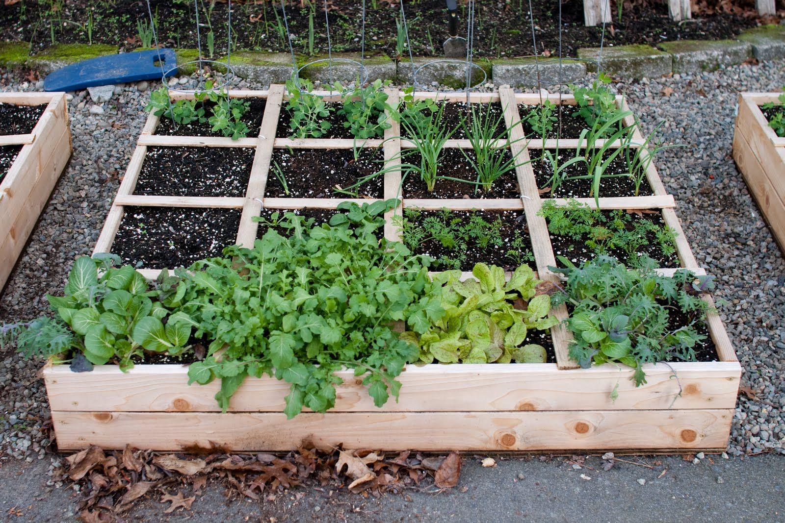 Raised Flower Beds Office Buildings | ... Raised Bed Kits, Building Raised  Beds · Raised Vegetable Garden ...